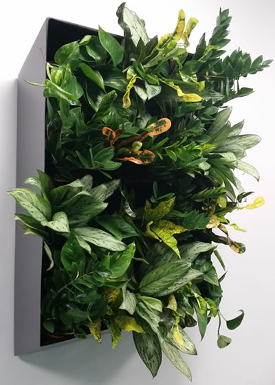 Living walls for offices, hotels and restaurants