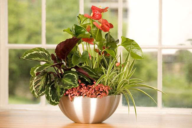 Office Plants Covent Garden Plants