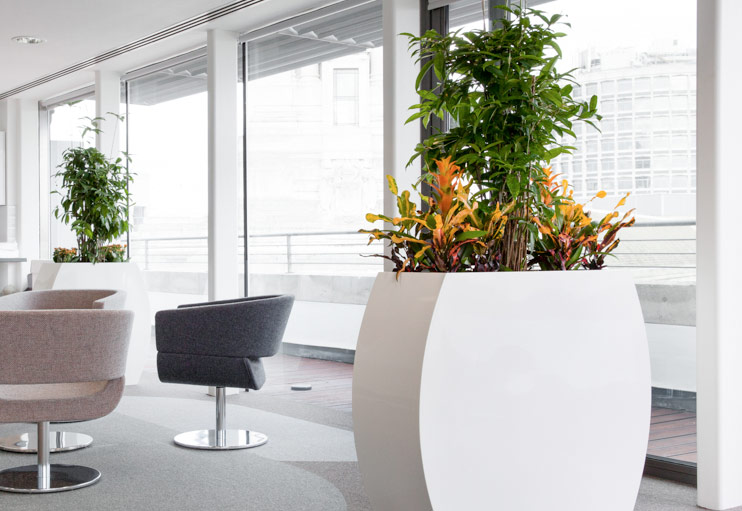 Office plant maintenance services