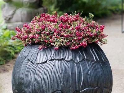 Sawa bowl iron